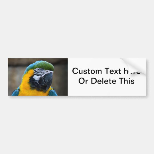 blue and gold macaw parrot head view c bumper sticker