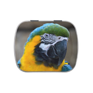 blue and gold macaw parrot head view c jelly belly tin