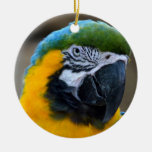 blue and gold macaw parrot head view c christmas tree ornaments