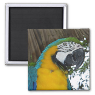 blue and gold macaw parrot magnet