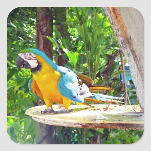 Blue and Gold Macaw Parrot Square Sticker