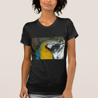 blue and gold macaw parrot t-shirt