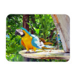 Blue and Gold Macaw Parrot Vinyl Magnet