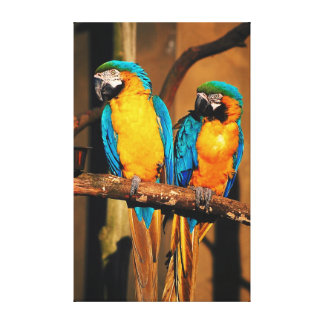 Blue and gold macaw parrots canvas print