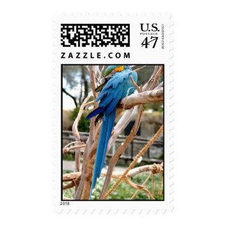 Blue And Gold Macaw Postage Stamp