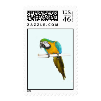 Blue and Gold Macaw Postage Stamps