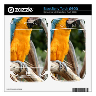 Blue And Gold Macaw Decal For BlackBerry
