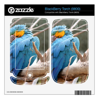 Blue And Gold Macaw BlackBerry Torch Decals