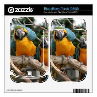 Blue And Gold Macaw BlackBerry Torch Skins