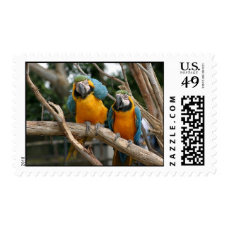 Blue And Gold Macaw Stamp