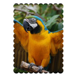 Blue and Gold Macaw with Wings Spread 5x7 Paper Invitation Card