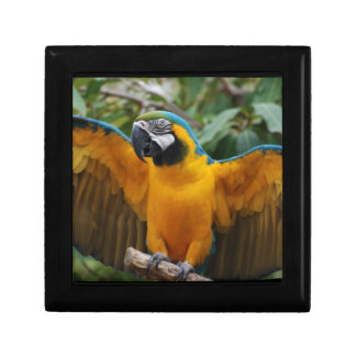 Blue and Gold Macaw with Wings Spread Keepsake Boxes