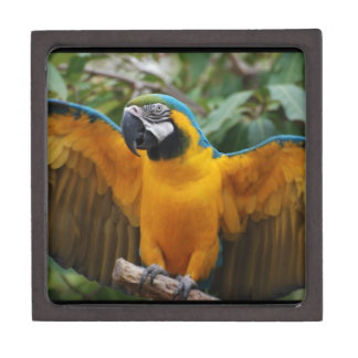 Blue and Gold Macaw with Wings Spread Premium Trinket Box