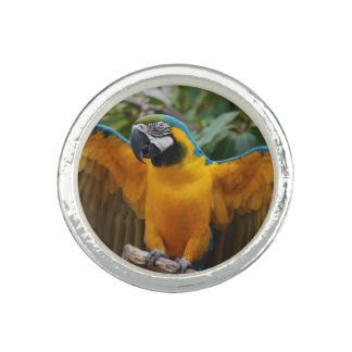 Blue and Gold Macaw with Wings Spread Ring