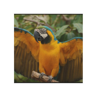 Blue and Gold Macaw with Wings Spread Wood Wall Decor