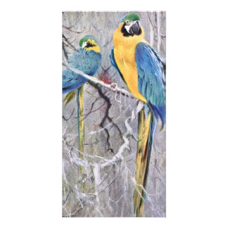 Blue and Gold Macaws Art Card