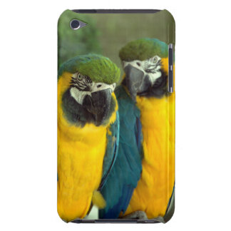 Blue and Gold Macaws iPod Touch 4th Gen Case-Mate iPod Touch Case