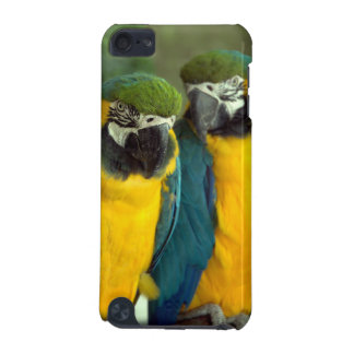 Blue and Gold Macaws iPod Touch 5g iPod Touch 5G Case