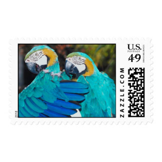 Blue and Gold Macaws Postage