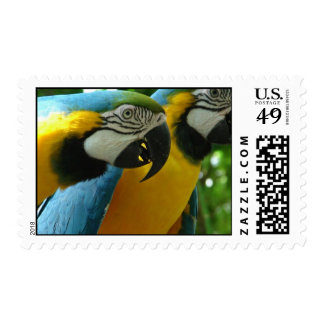 Blue and Gold Macaws Postage Stamp
