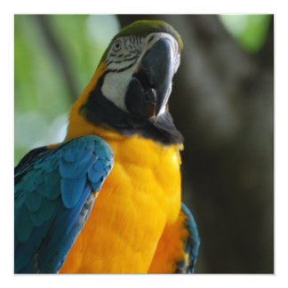 Blue and Gold Parrot Personalized Announcement