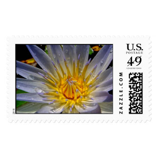 Blue and Gold Water Lily Postage Stamp