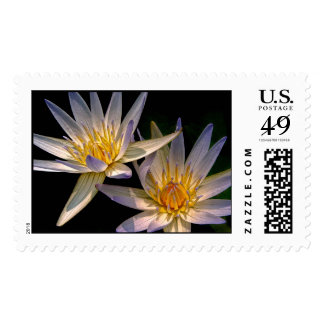 Blue and Gold Water Lily Twins Postage