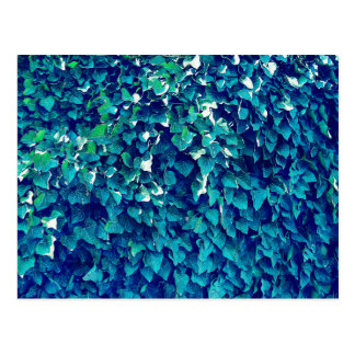 Blue And Green Foliage Postcard