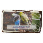 parakeets, blue and green, parrots, birds,
