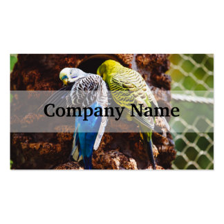 Blue and Green Parakeets, Bird Photography Double-Sided Standard Business Cards (Pack Of 100)
