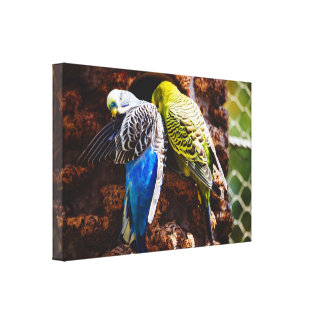 Blue and Green Parakeets, Bird Photography Canvas Print
