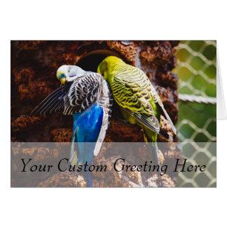 Blue and Green Parakeets, Bird Photography Card