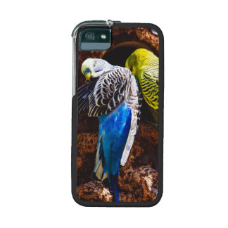 Blue and Green Parakeets, Bird Photography Cover For iPhone 5/5S