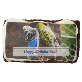 Blue and Green Parakeets, Bird Photography Chocolate Brownie