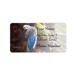 Blue and Green Parakeets, Bird Photography Label