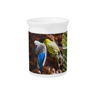 Blue and Green Parakeets Bird Photography Beverage Pitchers