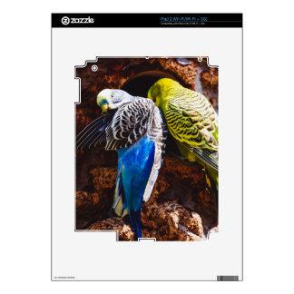 Blue and Green Parakeets, Bird Photography iPad 2 Skins