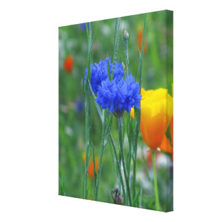 Blue and Orange Wildflowers Stretched Canvas Print