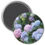 Blue and Purple Hydrangea 3 Inch Round Magnet