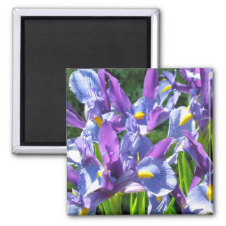 Blue and Purple Irises 2 Inch Square Magnet
