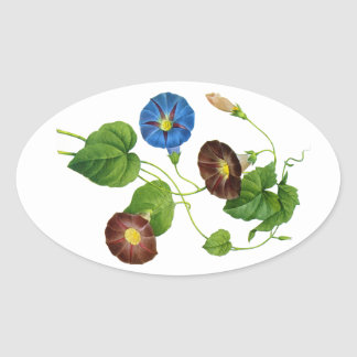 Blue and Purple Morning Glory Vines by Redoute Oval Sticker