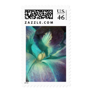 Blue and purple orchid close up stamps