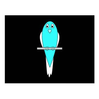 Blue and White Bird. Parakeet. Black. Postcard