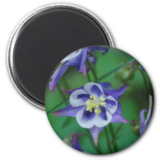 Blue and White Columbine Flowers  Magnet