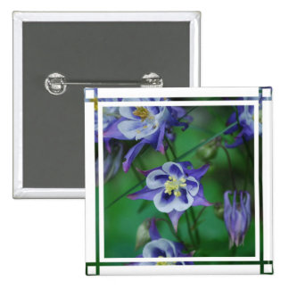 Blue and White Columbine Flowers  Pin