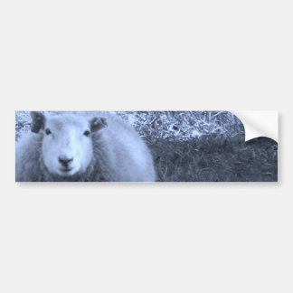 Blue and White  Mother sheep Car Bumper Sticker