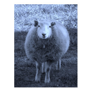 Blue and White  Mother sheep Postcard