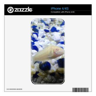 Blue and white pebbles and Albino cat fish Skins For The iPhone 4S