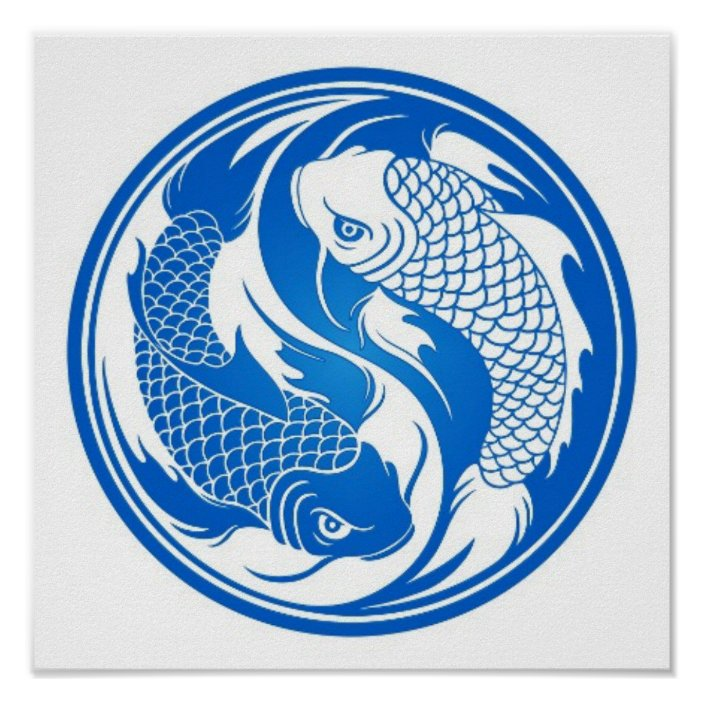 Blue And White Yin Yang Koi Fish Poster Zazzle Com