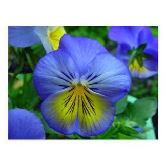Blue and Yellow Flower Postcard